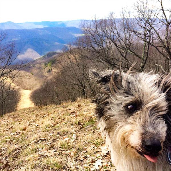 Bosco Top of the Mountain